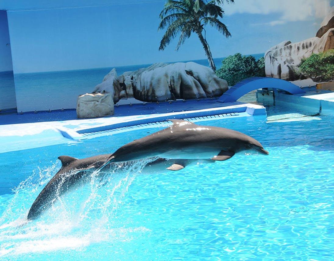 Hotel vicino al parco acquatico zoomarine victoria terme - Parco tivoli piscina ...